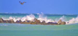 SURFweb
